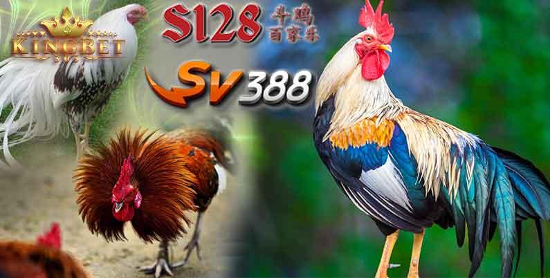Adu Ayam S128 Game Tarung Ayam Live Arena Asia | S128laga.club