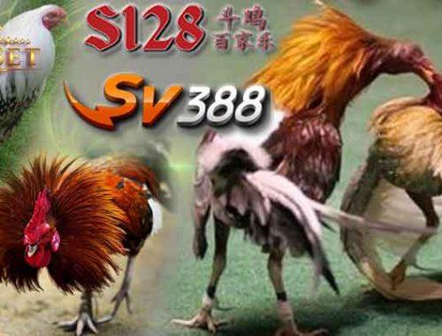 Ayam S128